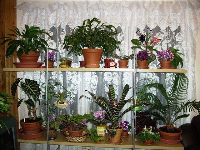 Комнатные растения дома фото