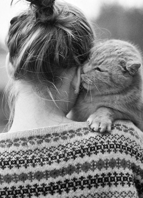 Кот лижет за ухом просто